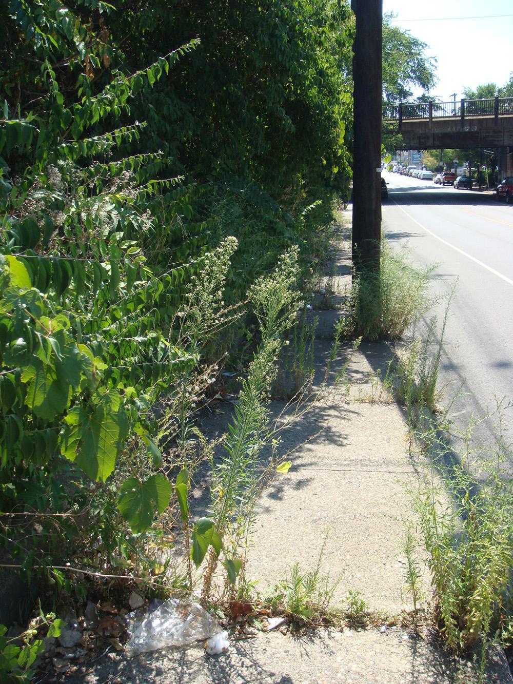 Broken Sidewalk on Spring Street