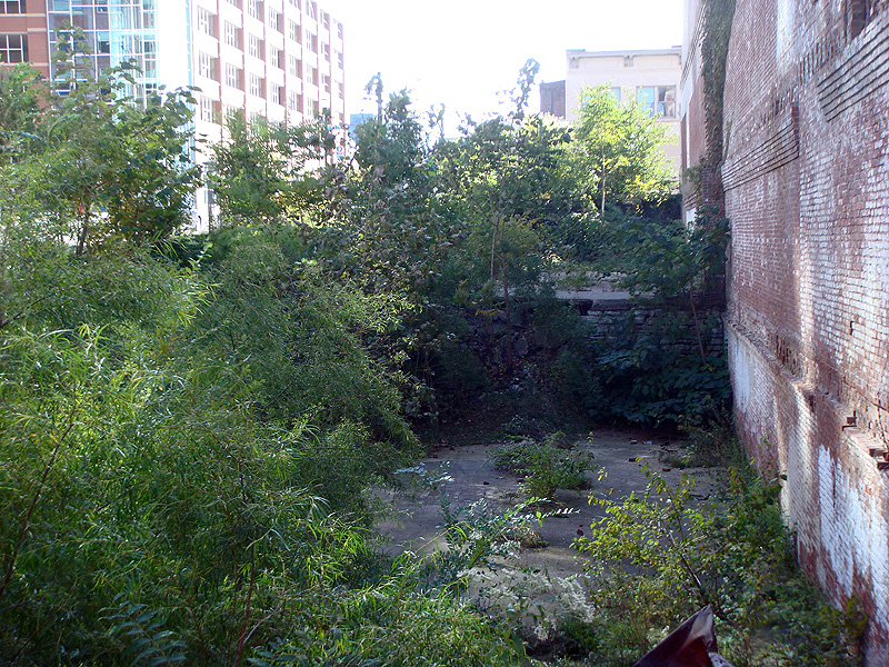 Weeds cover the site of a collapsed building (BS File Photo)