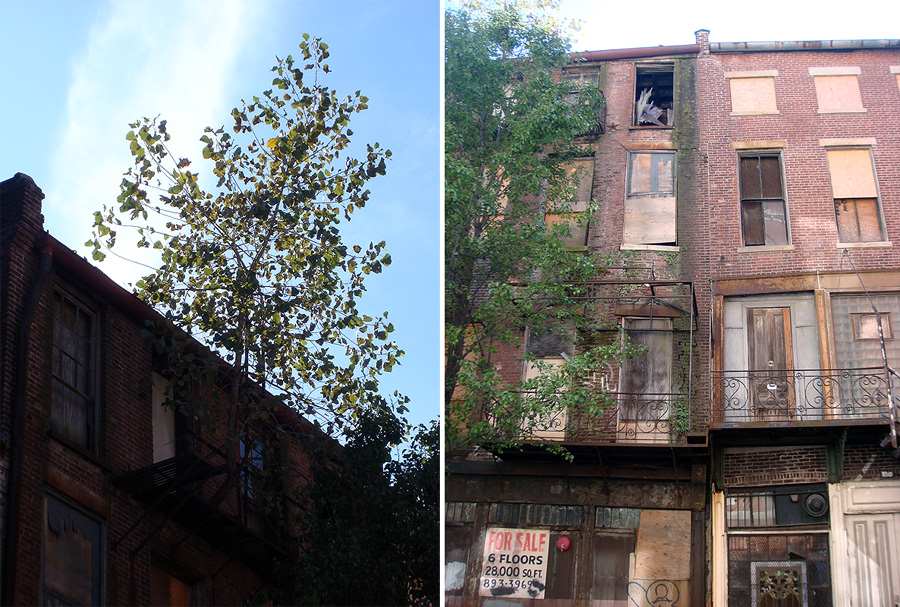 Tree growing from the Iron Quarter facades (BS File Photo)