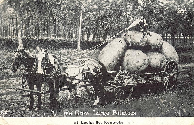 Louisville grows large potatoes (BS File Postcard)