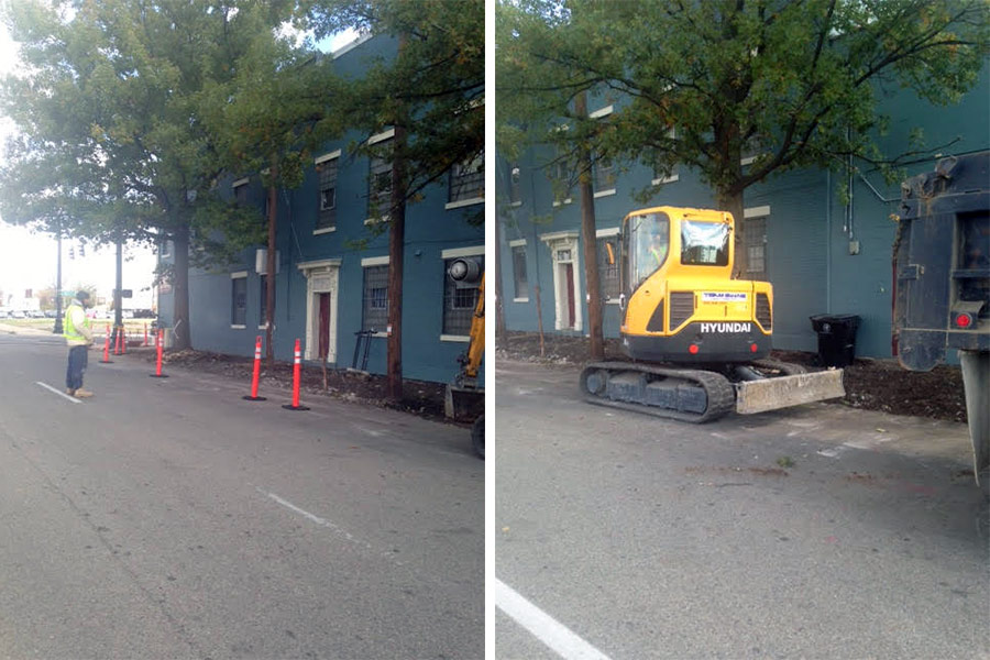 Two mature trees on Shelby Street are marked for removal. (Courtesy Tipster)