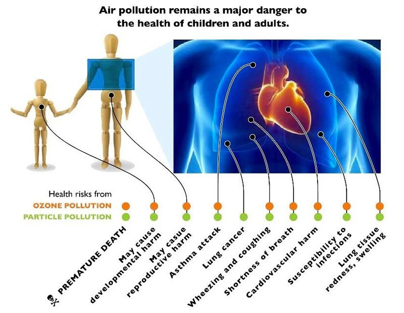 """From the American Lung Association's """"Health Effects of Ozone and Particle Pollution."""" (Courtesy American Lung Association)"""